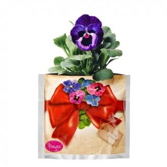 """Растущая трава """"Фиалка"""", в подарочном пакете"""